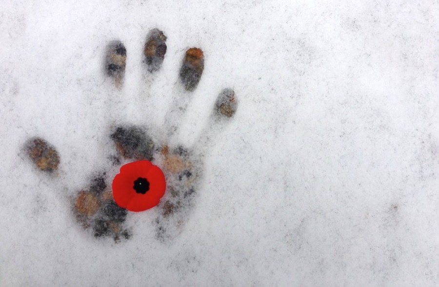 Why we wear poppies