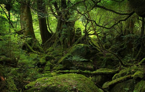 The suicide forest (Japan)