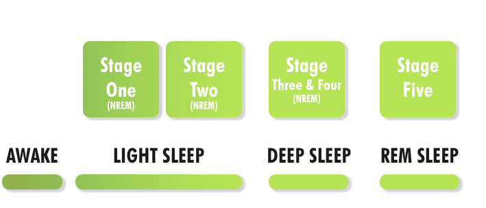 Stages+of+Sleep