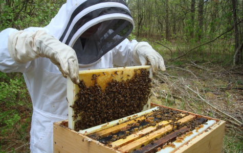 Bees and the Human Race: how important are bees?