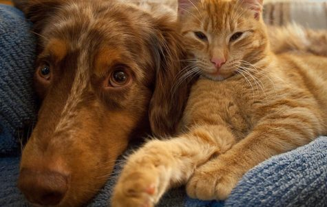 Simply put:  dogs are better than cats