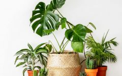 The Most Pandemic Friendly Houseplants